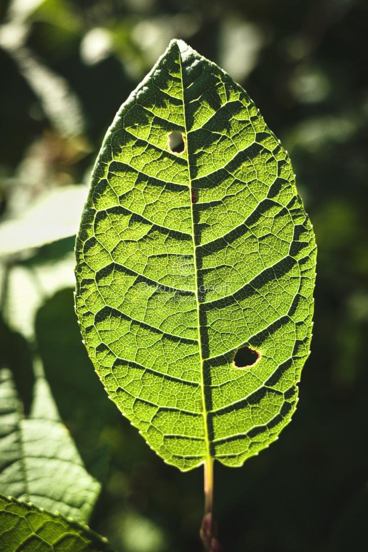 """Green Leaf III"" stock image"
