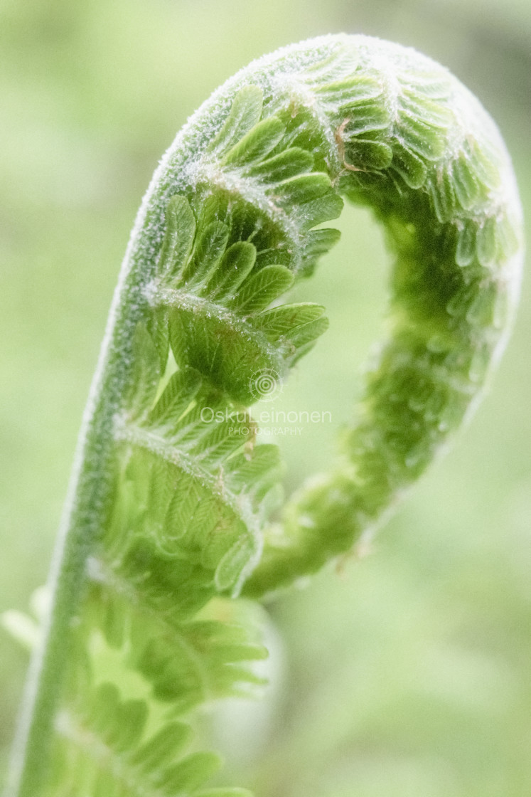 """""""Fern IV (Bright Colours)"""" stock image"""