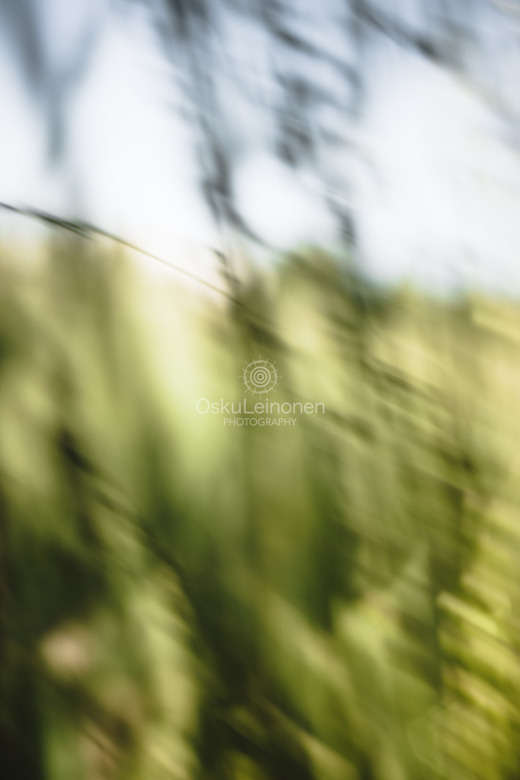 """""""Warm Summer Days I (Meadow)"""" stock image"""