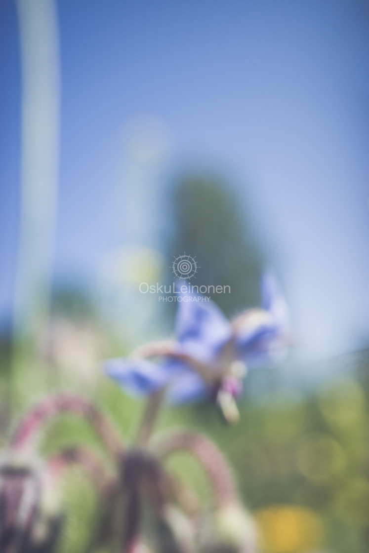 """""""Abstract Flowers VI (Meadow)"""" stock image"""