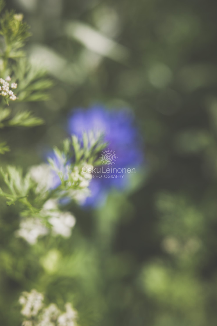 """""""Abstract Flowers III (Blue And White)"""" stock image"""