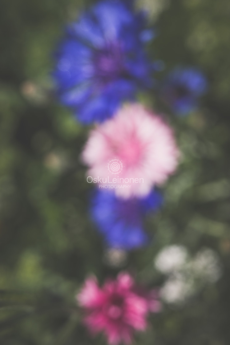 """""""Abstract Flowers IV (Pink)"""" stock image"""