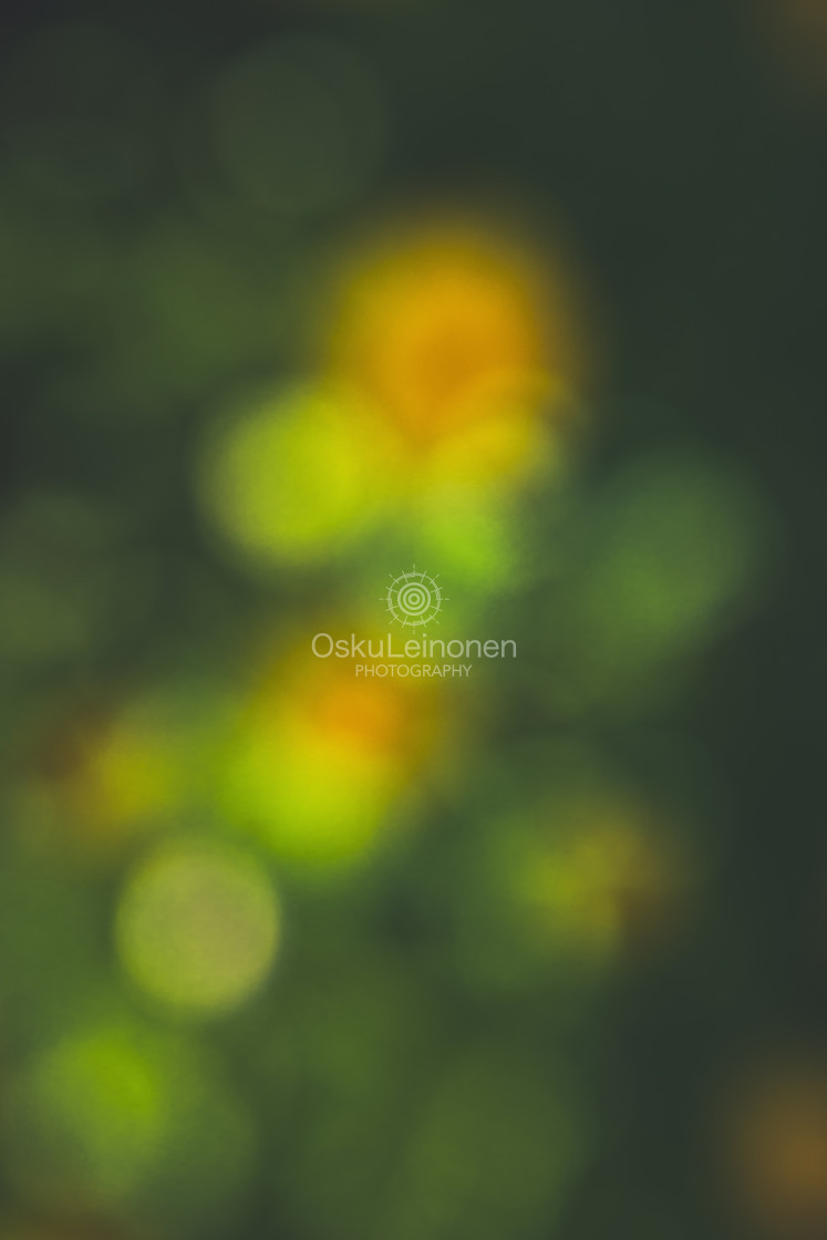 """""""Abstract Flowers XII (Adorable)"""" stock image"""