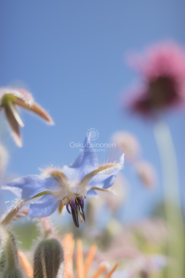 """""""Abstract Flowers XVII (Soft Blue)"""" stock image"""