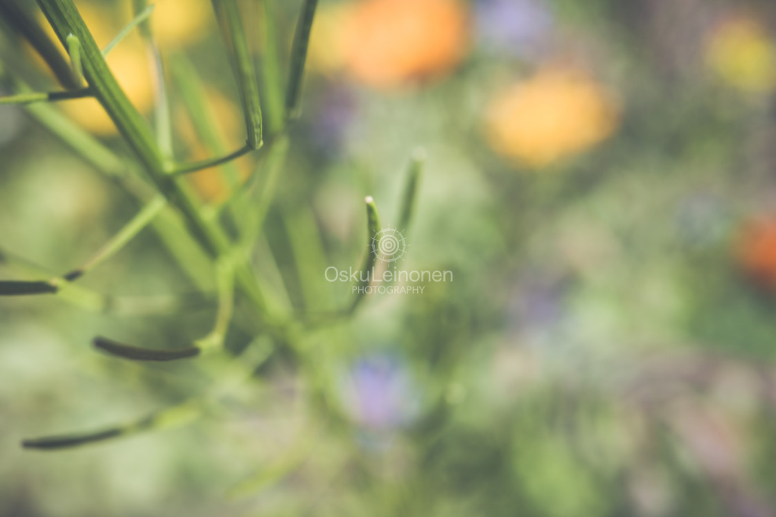 """""""Abstract Flowers XIV (Structure)"""" stock image"""