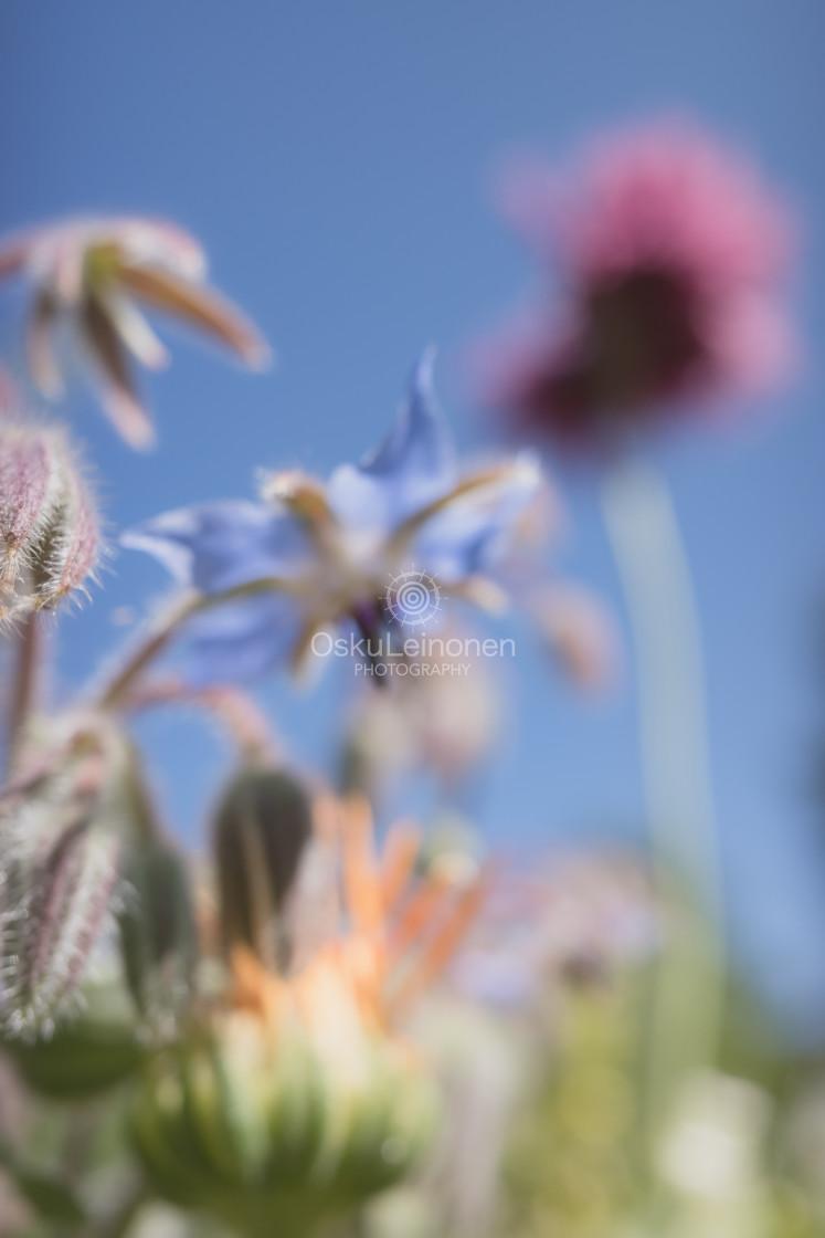 """Abstract Flowers XVIII (Star)"" stock image"