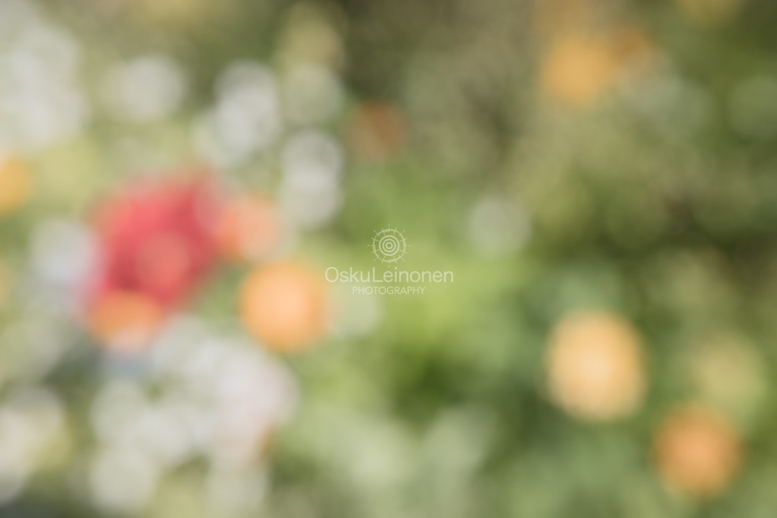"""""""Abstract Flowers XIX (Red Flower)"""" stock image"""