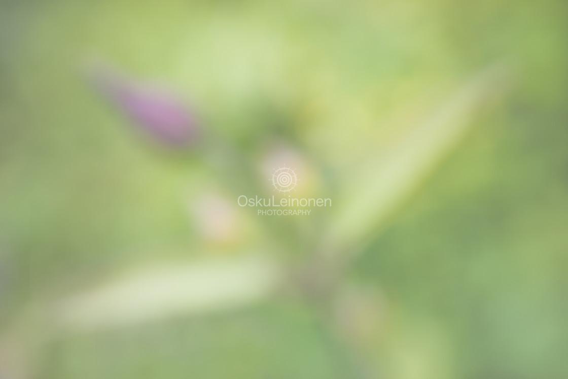 """Aesthetic Nature VIII (Tenderly Soft)"" stock image"