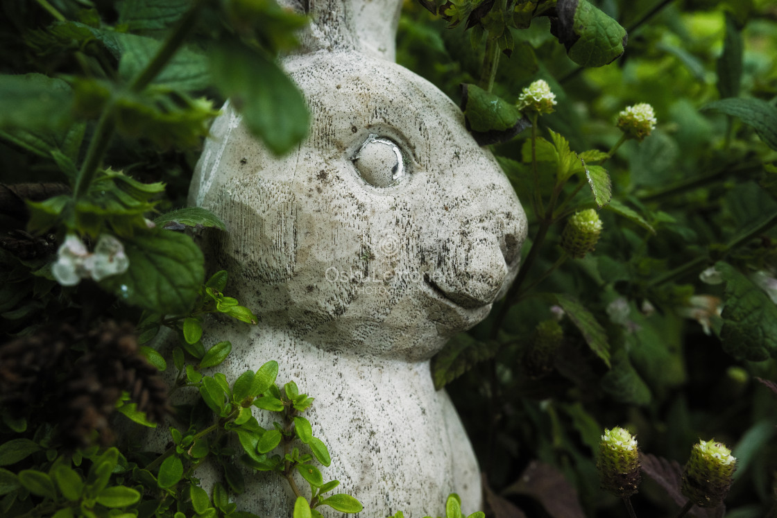 """Concrete Bunny II (Unique)"" stock image"