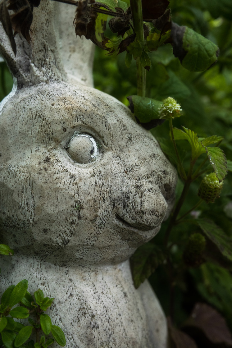 """""""Concrete Bunny I (Be The First)"""" stock image"""