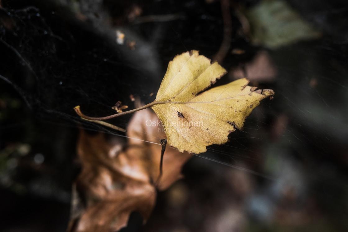 """Golden Leaf II (Miracle)"" stock image"