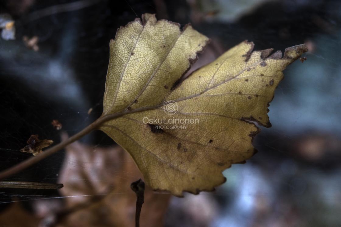 """""""Golden Leaf IV (Spectacular)"""" stock image"""