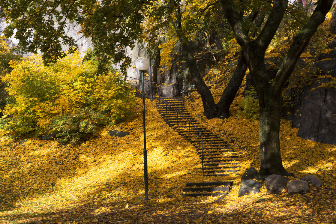 """""""Yellow leaf on outdoorstair"""" stock image"""