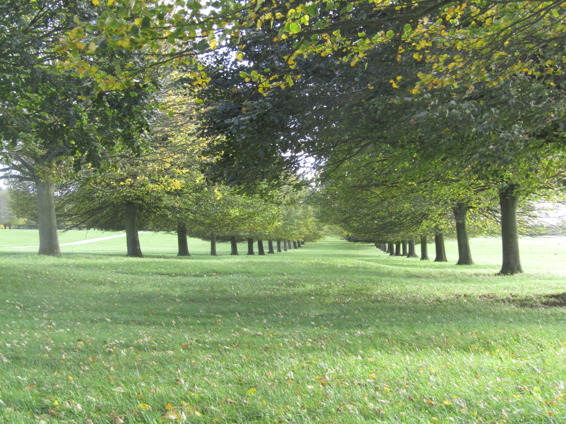 """Oxfordshire tree-lined route to nowhere"" stock image"