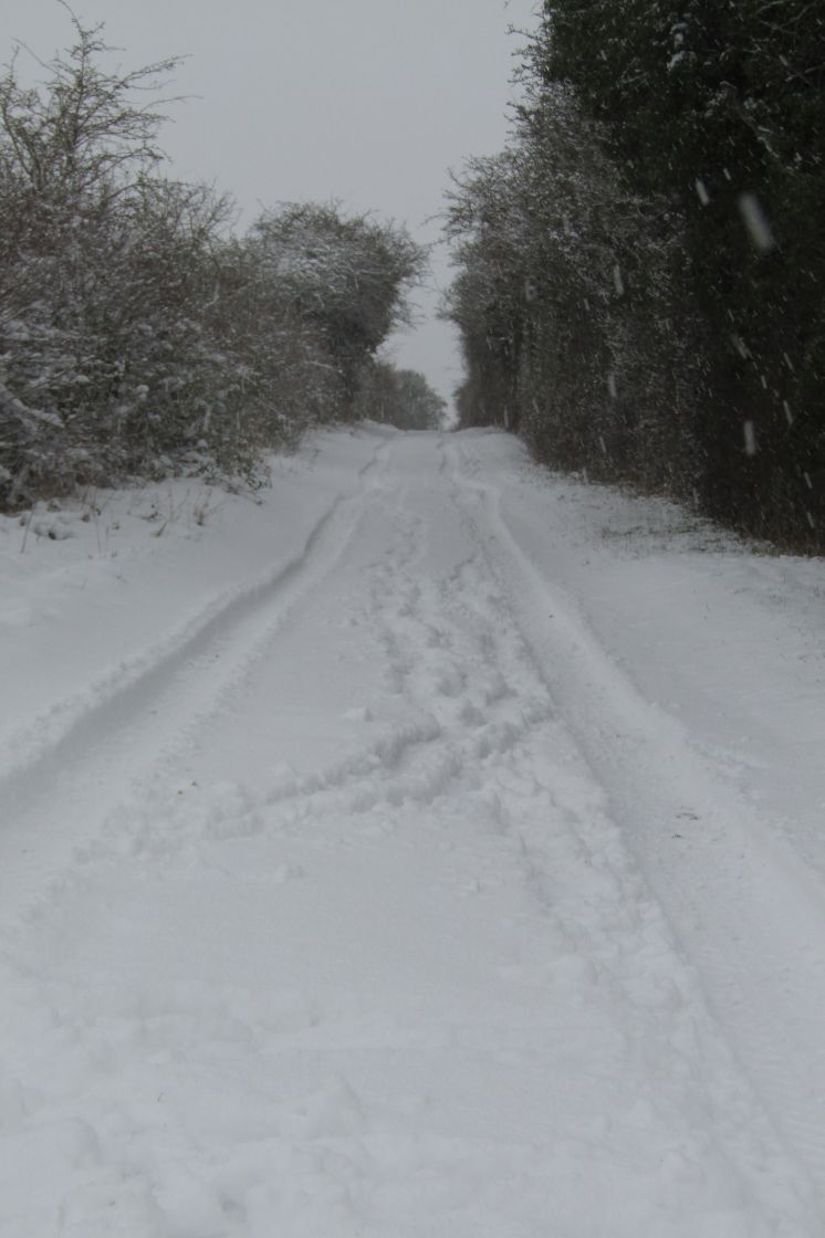 """Cotswold bridleway in snow"" stock image"