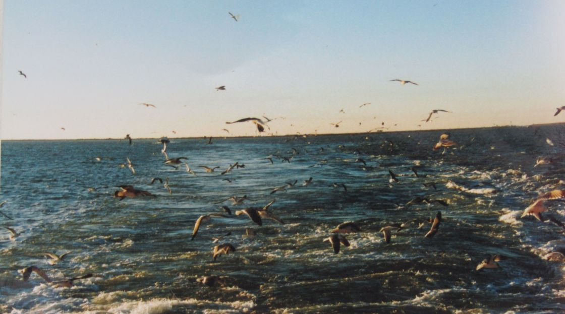 """Bird feeding time offshore"" stock image"