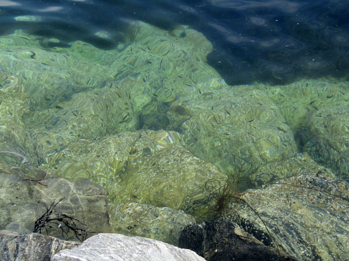 """""""Under the water at Froya, Norway"""" stock image"""