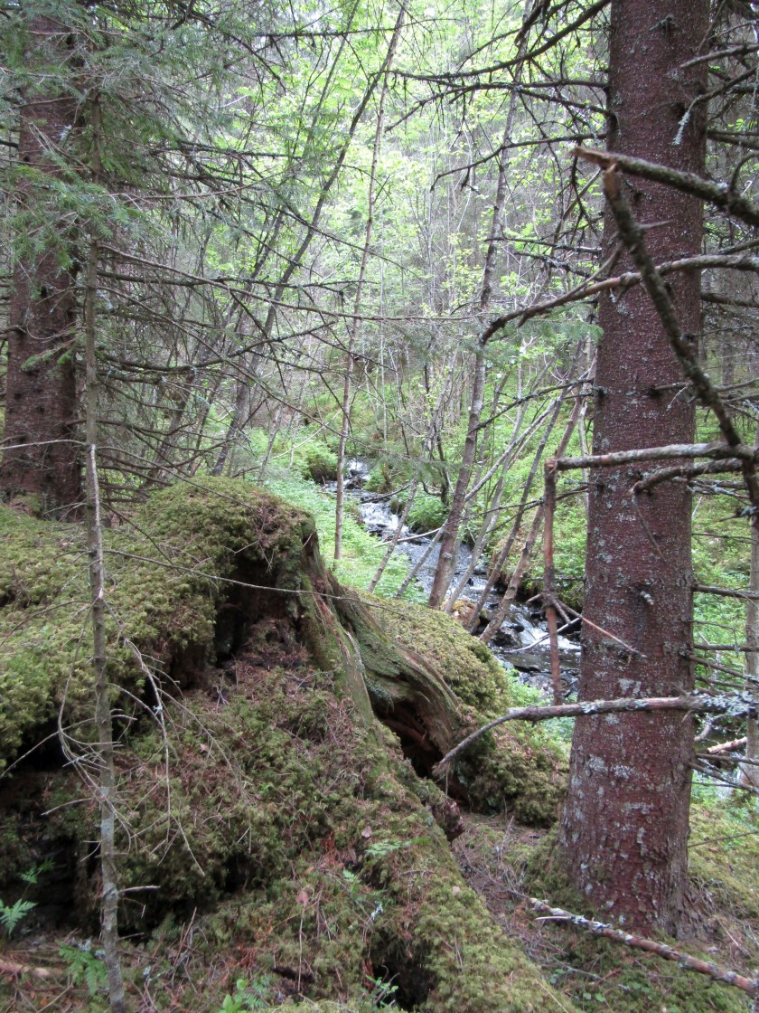 """""""Norway forest and stream view"""" stock image"""