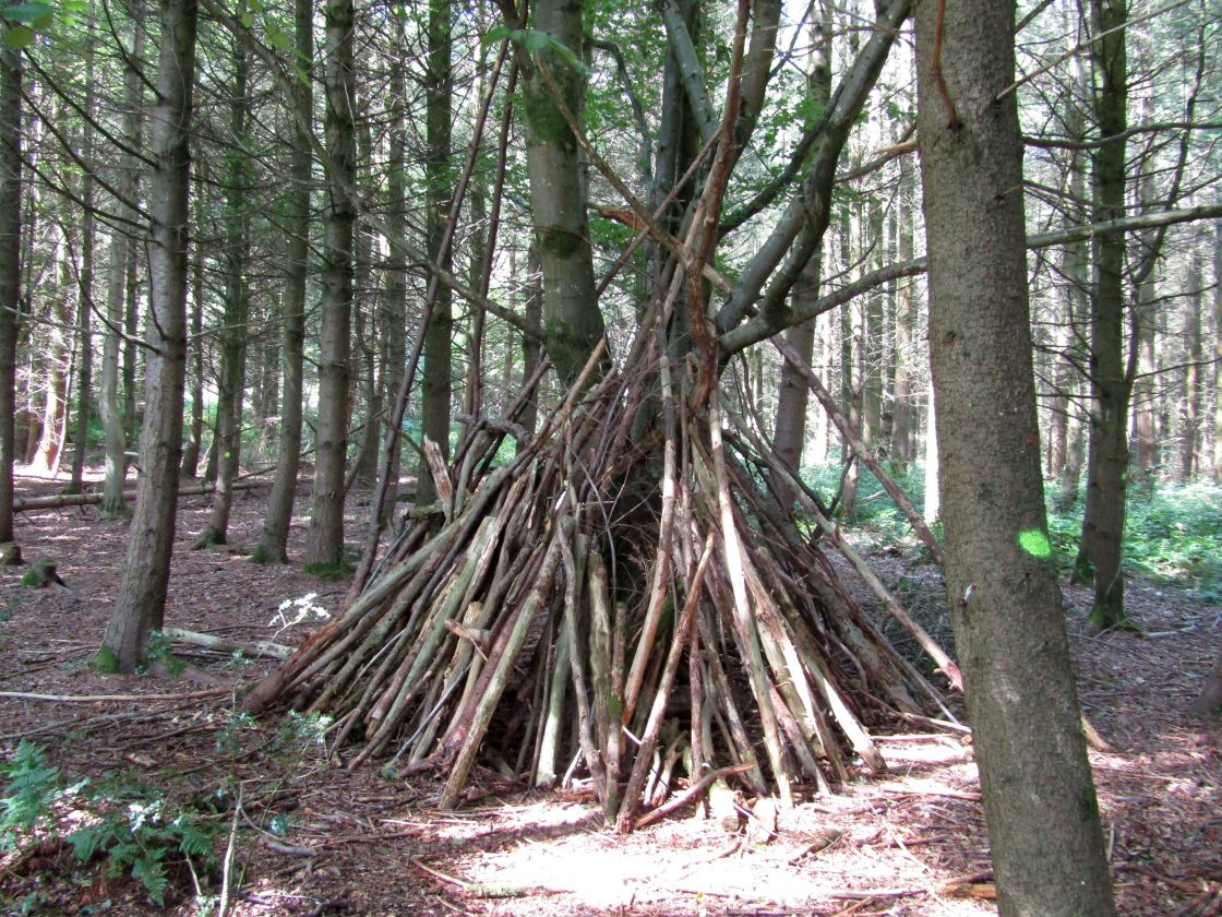 """Tree wigwam in Quantock Hills forest"" stock image"