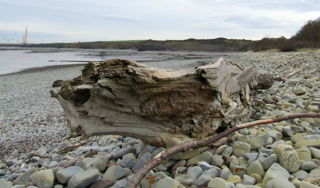 """Large old tree washed up on Lilstock beach"" stock image"