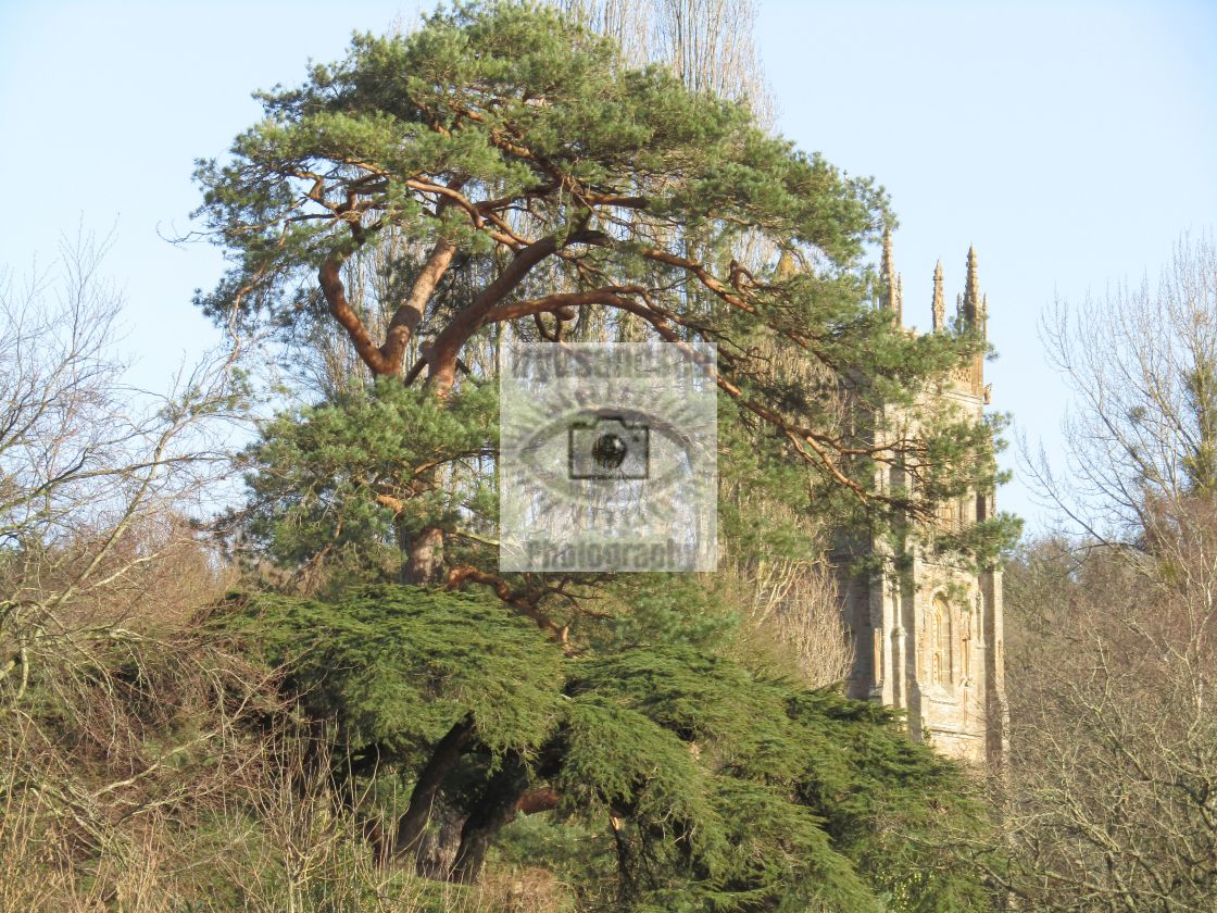 """13th century church behind trees in Somerset"" stock image"