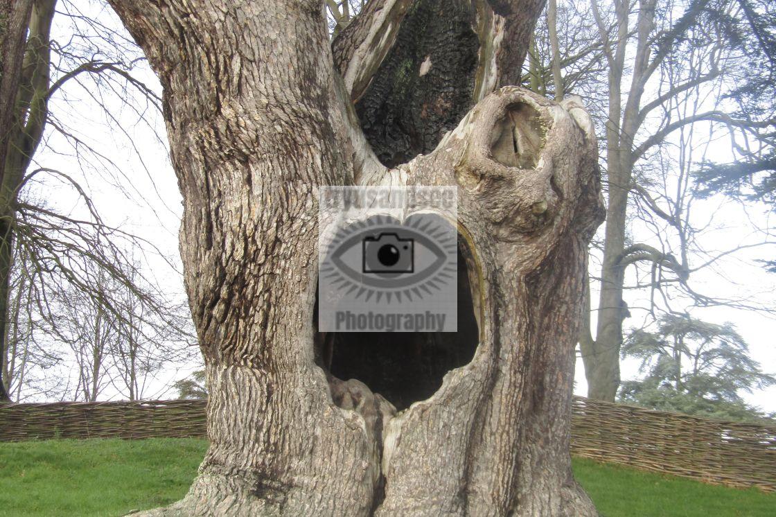 """Harry Potter tree"" stock image"