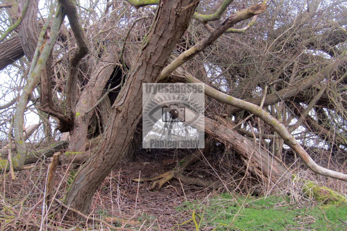 """""""Fallen tree branches in a jumble!"""" stock image"""