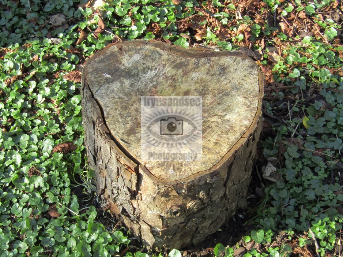 """""""Forest love heart!"""" stock image"""
