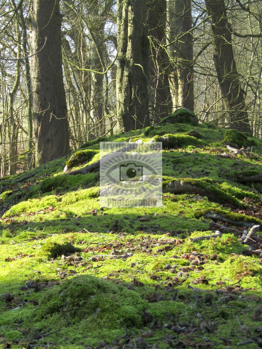 """Moss hill"" stock image"
