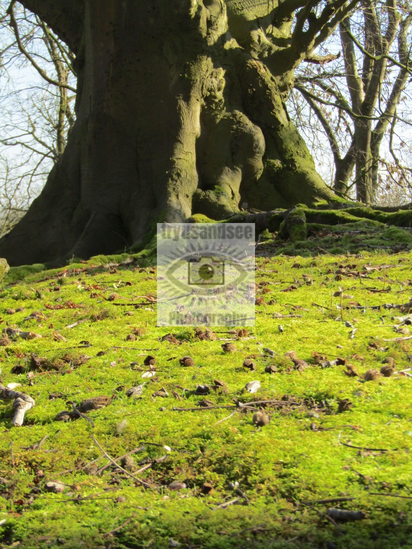 """""""Moss slope leading to large tree trunk"""" stock image"""