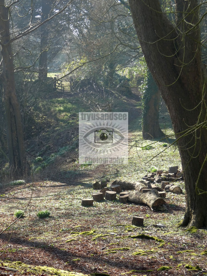 """""""Tangled tree branches and logs in sunlight"""" stock image"""
