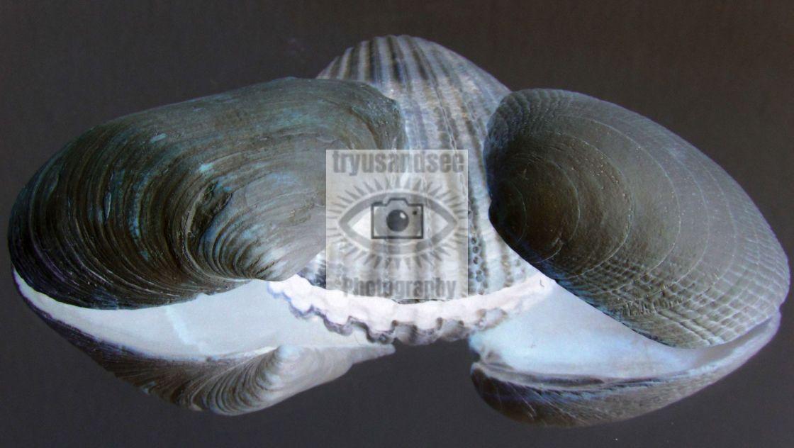 """Reflection of Sea Shells"" stock image"