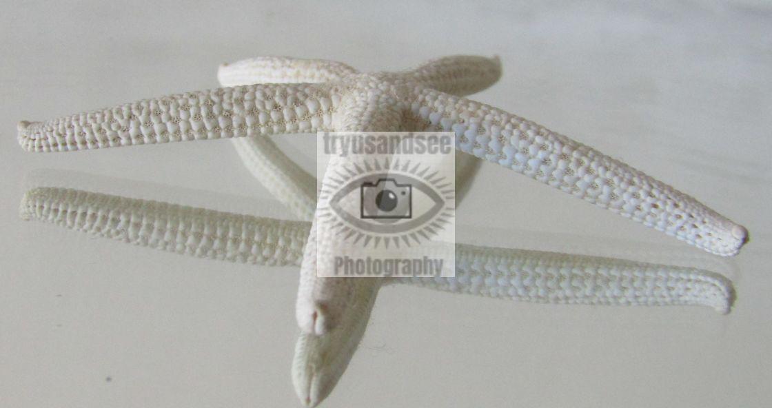 """Reflection of Starfish"" stock image"