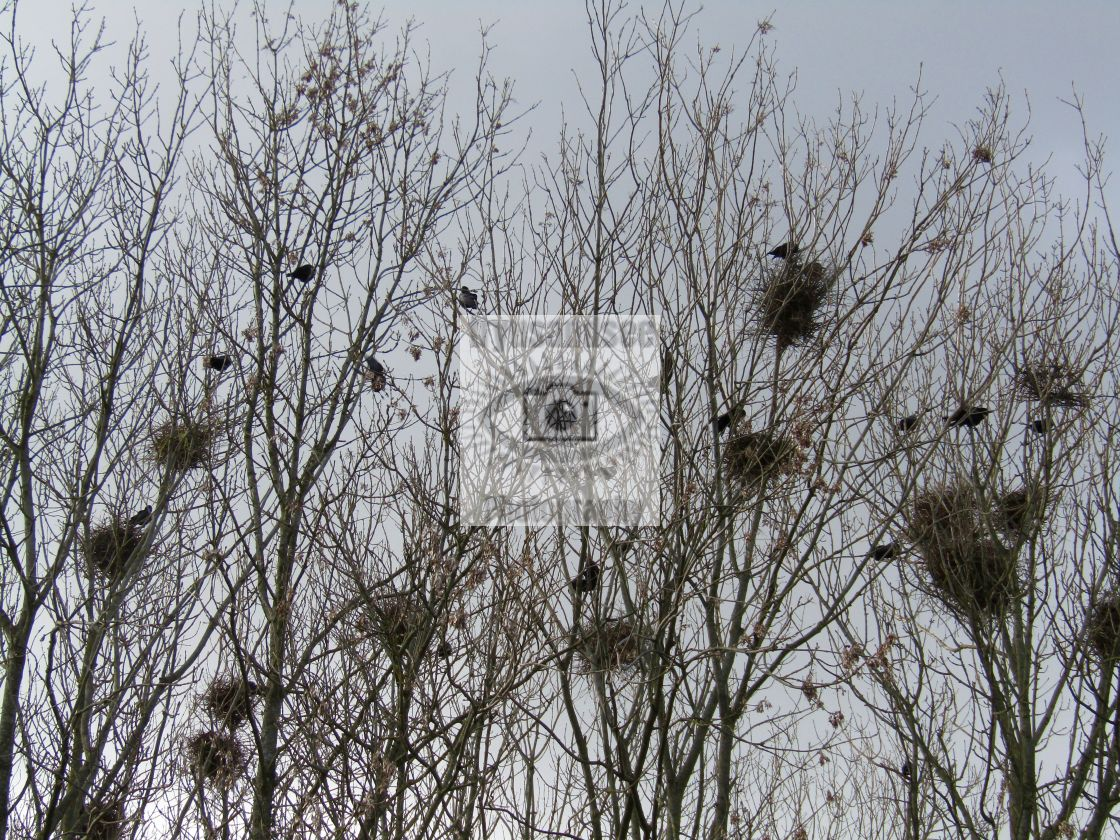 """""""Birds nesting in Spring."""" stock image"""