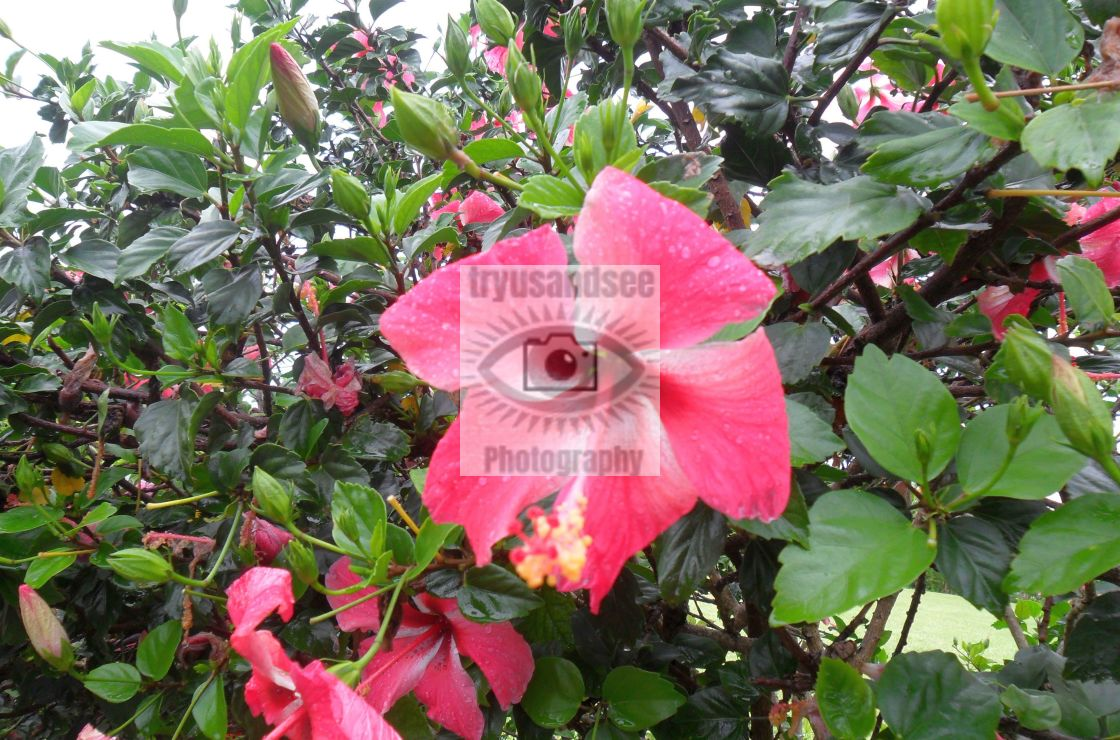 """Flora of Bermuda"" stock image"