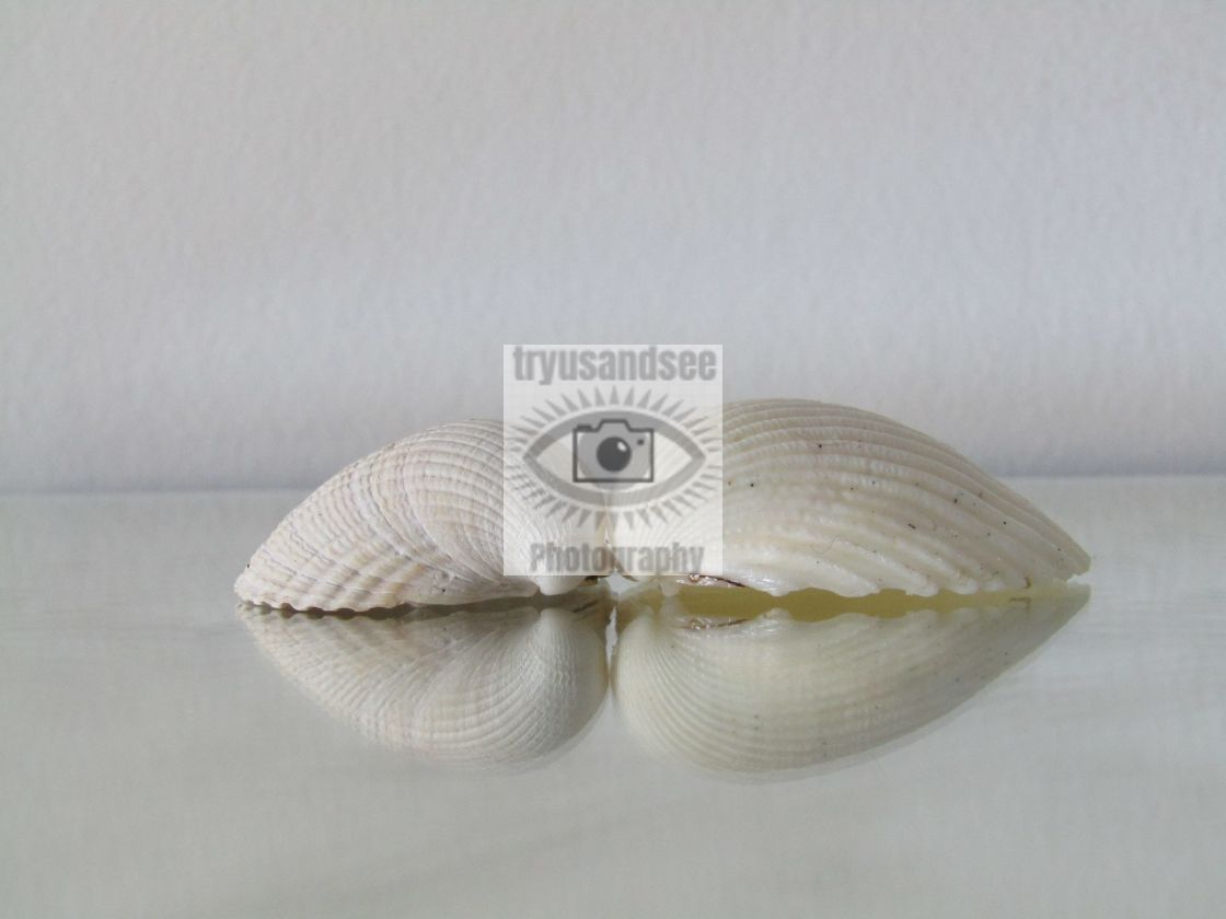"""Reflection of shells"" stock image"