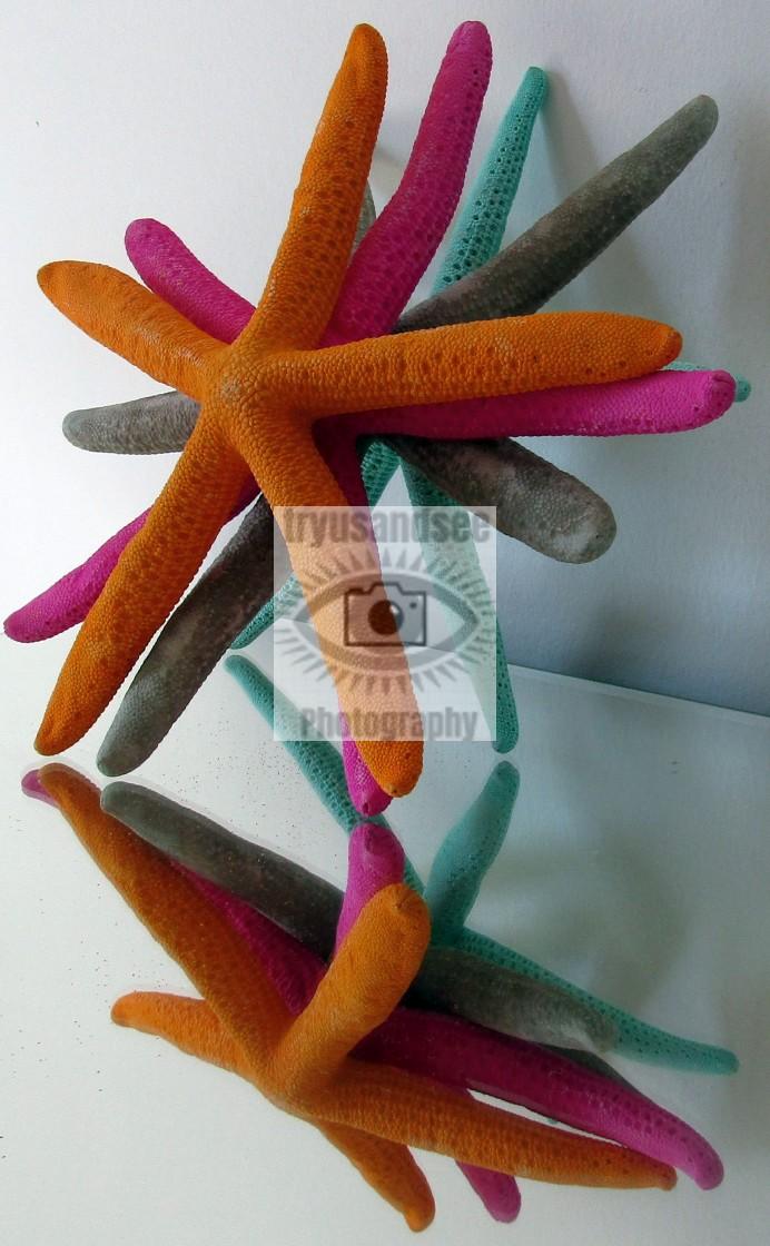 """Starfish reflection"" stock image"