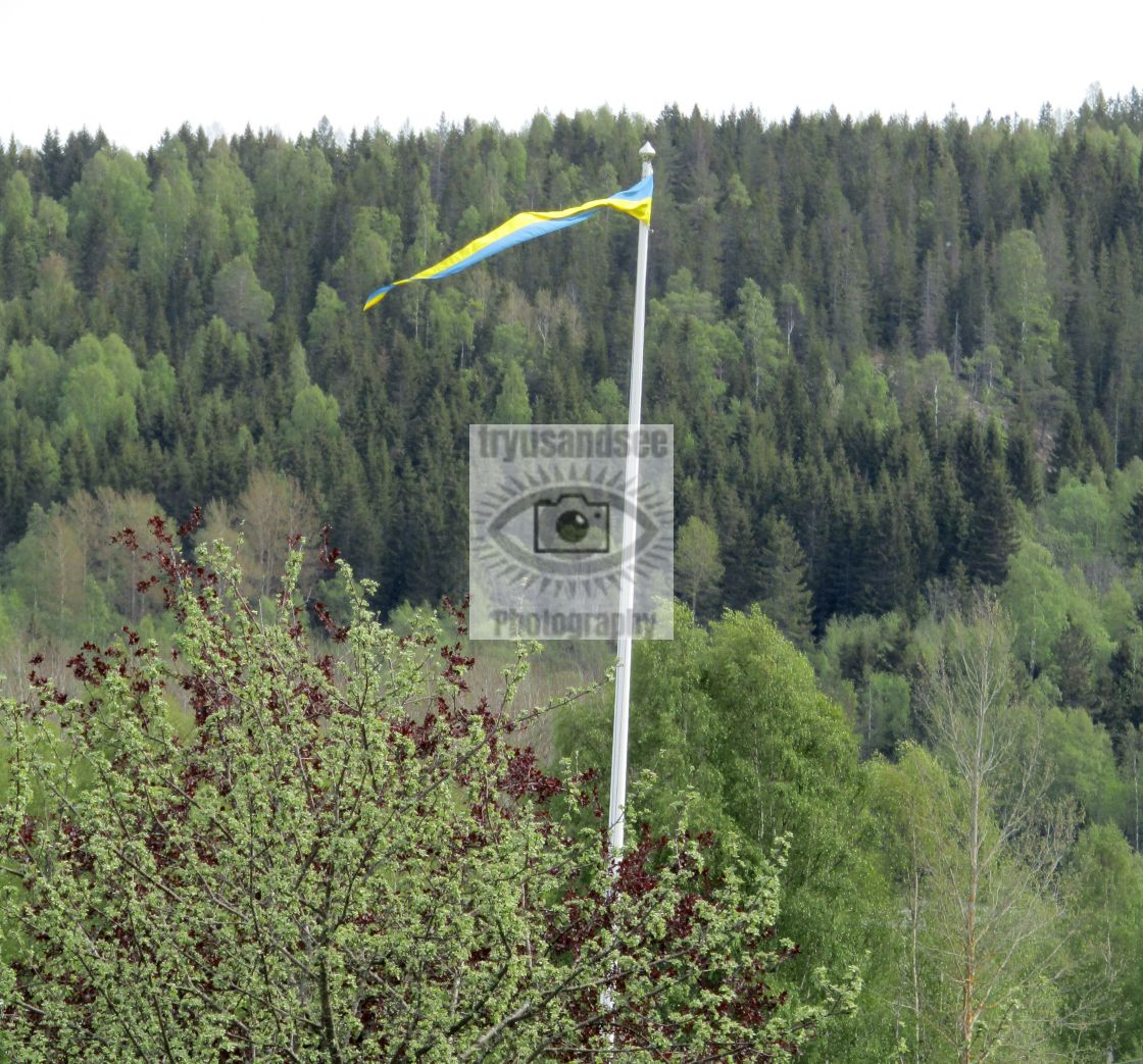 """""""Sweden pennant flying high within forest"""" stock image"""