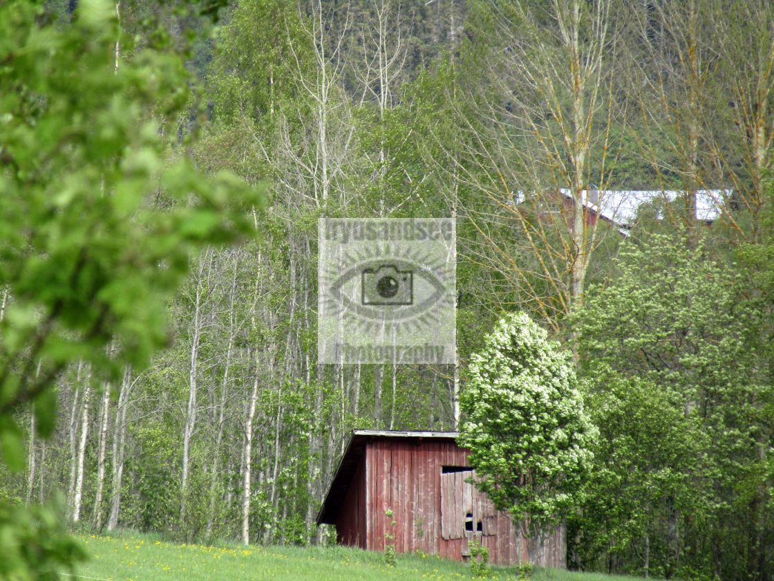 """Wooden hut in Nordingra, Sweden forest"" stock image"