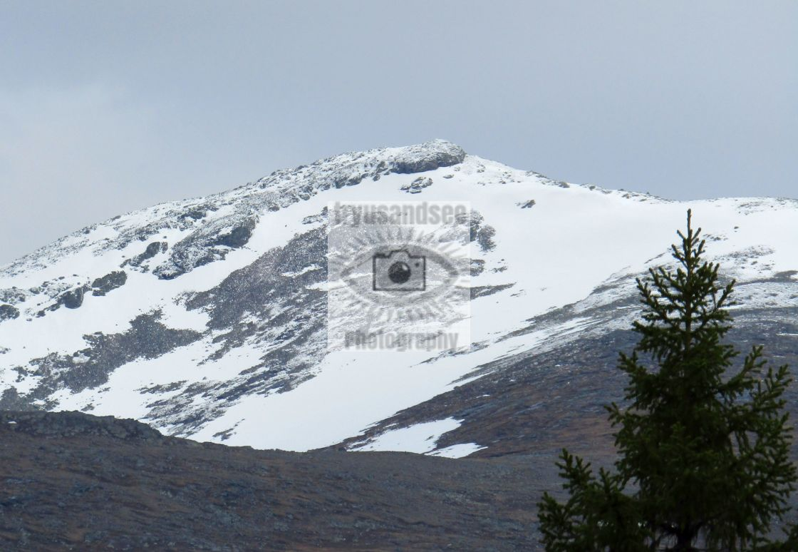 """""""Sweden mountain snow in May"""" stock image"""