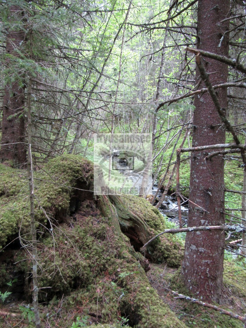 """Norway forest and stream view"" stock image"