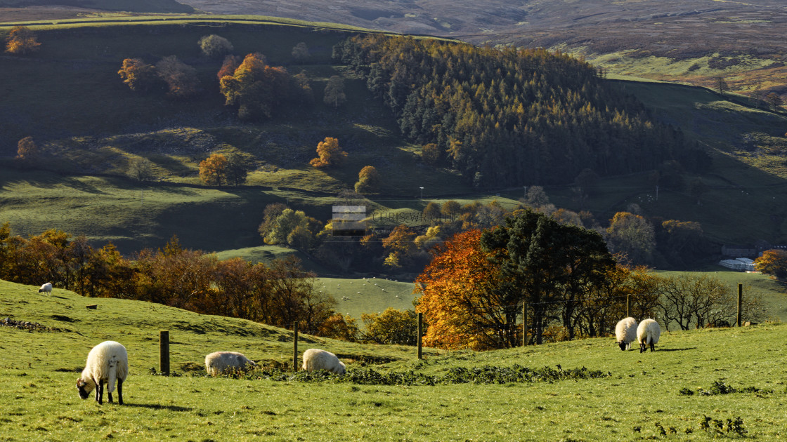 """Autumn Sunshine in the Yorkshire Dales"" stock image"
