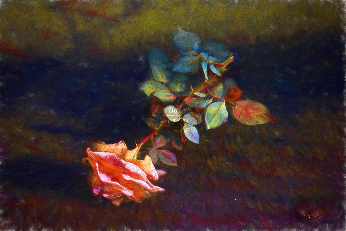 """""""Forgotten Rose"""" stock image"""