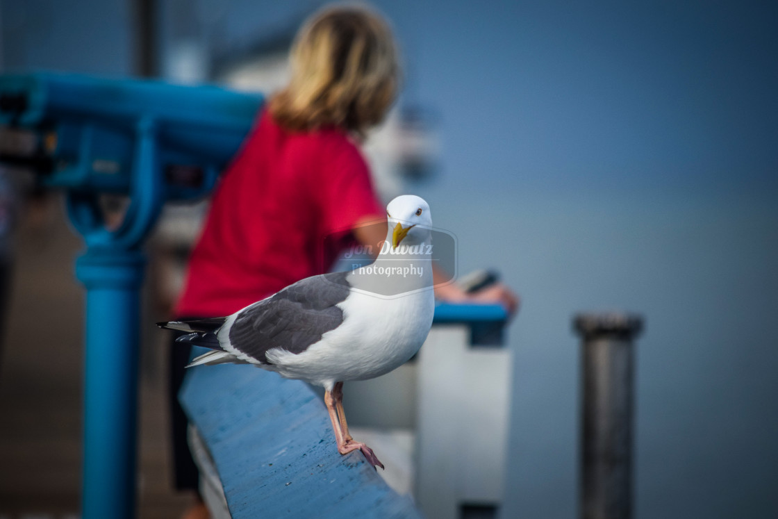 """Seagull and Boy"" stock image"