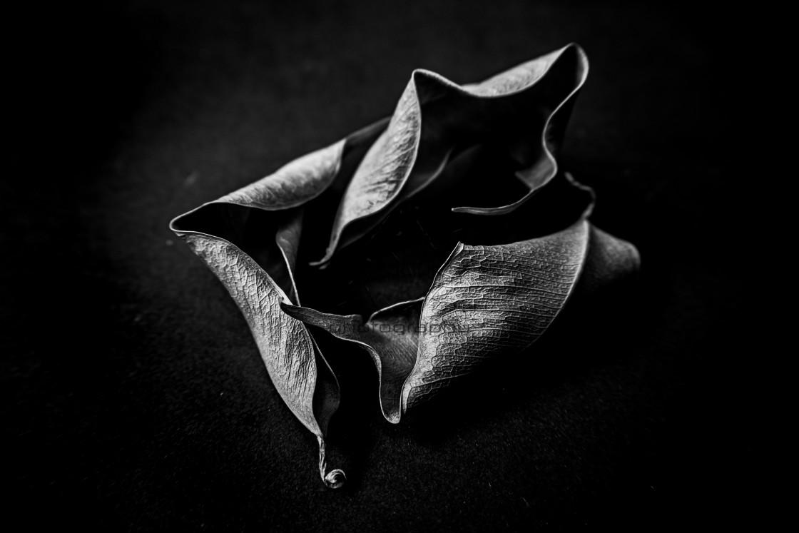 """""""dead leafs flower vol. 2"""" stock image"""