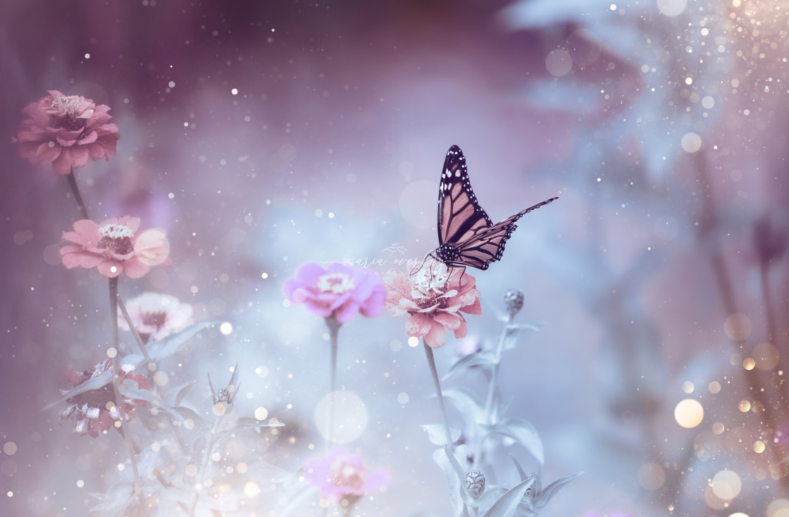 """""""Sparkly Butterfly"""" stock image"""