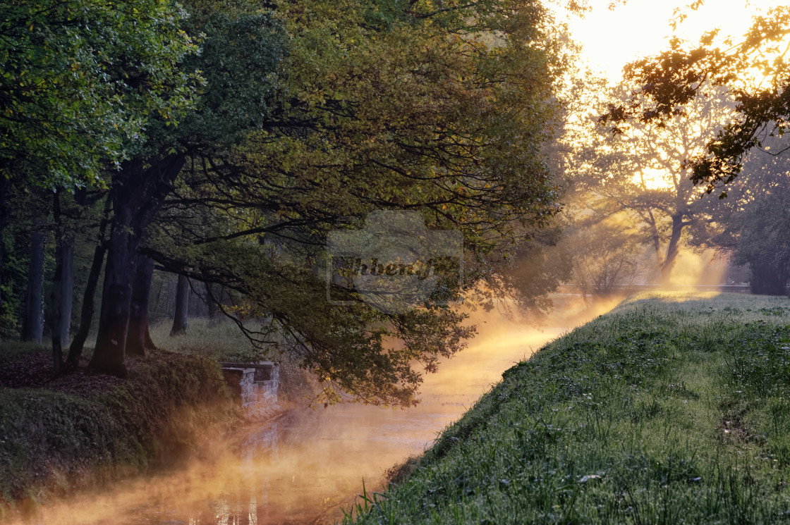 """Misty sunlight"" stock image"