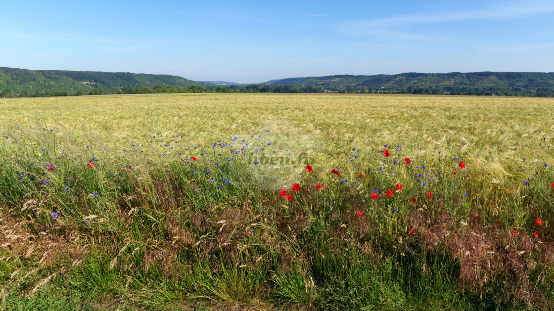 """Limetz-Villez fields"" stock image"