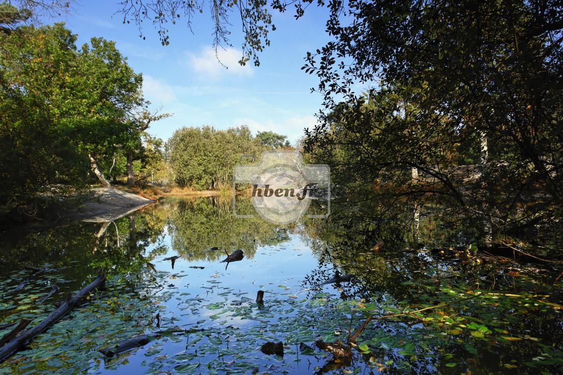 """Franchard pond"" stock image"