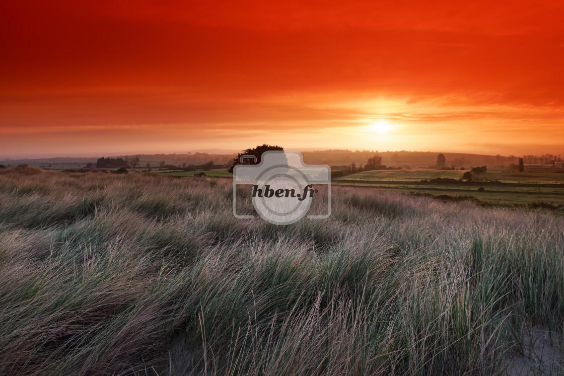 """""""Cotentin coastal dunes"""" stock image"""